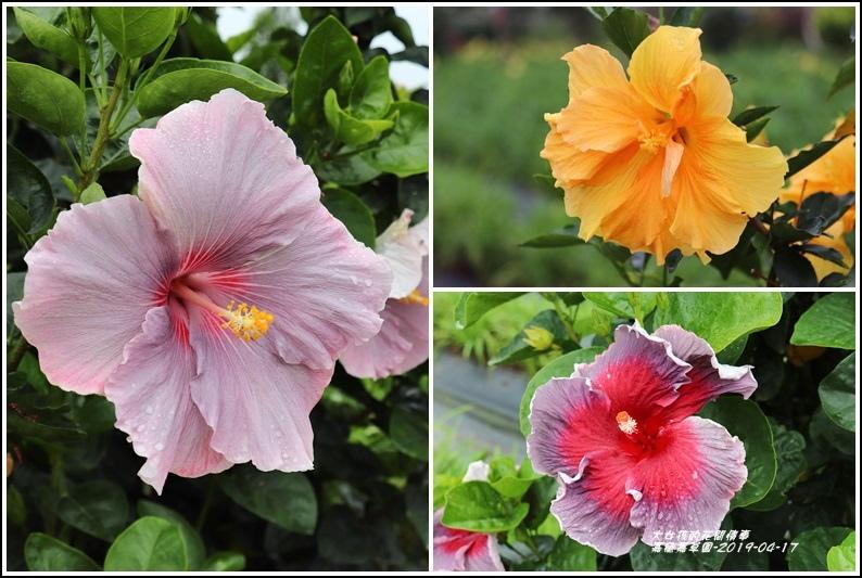 嘉德萱草園-2019-04-37.jpg