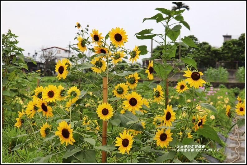 嘉德萱草園-2019-04-45.jpg