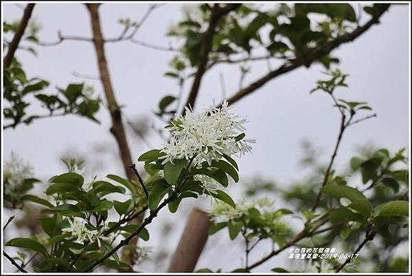 嘉德萱草園-2019-04-50.jpg