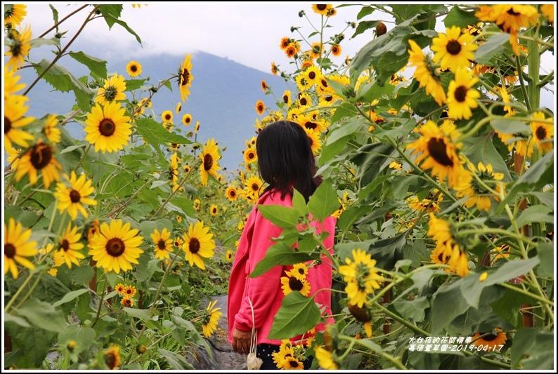 嘉德萱草園-2019-04-59.jpg