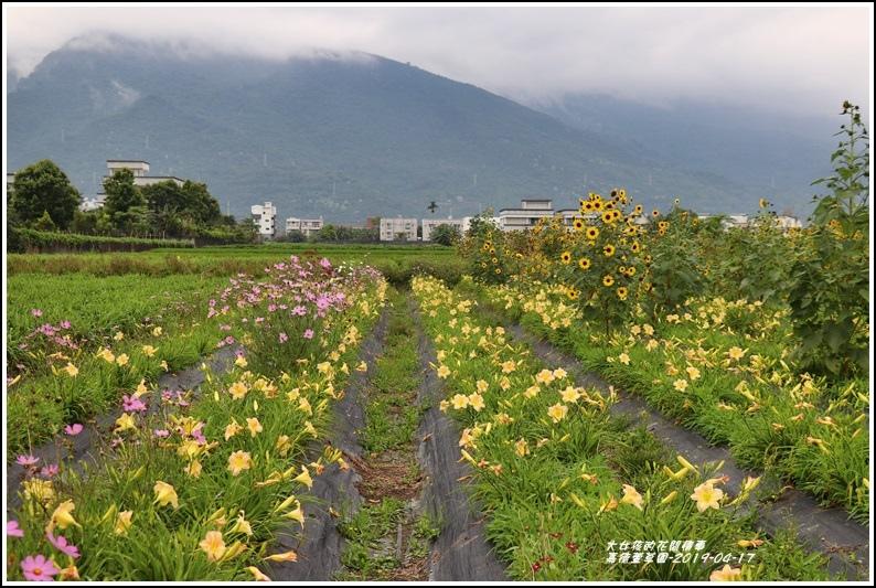 嘉德萱草園-2019-04-63.jpg