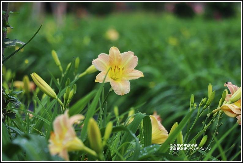 嘉德萱草園-2019-04-71.jpg