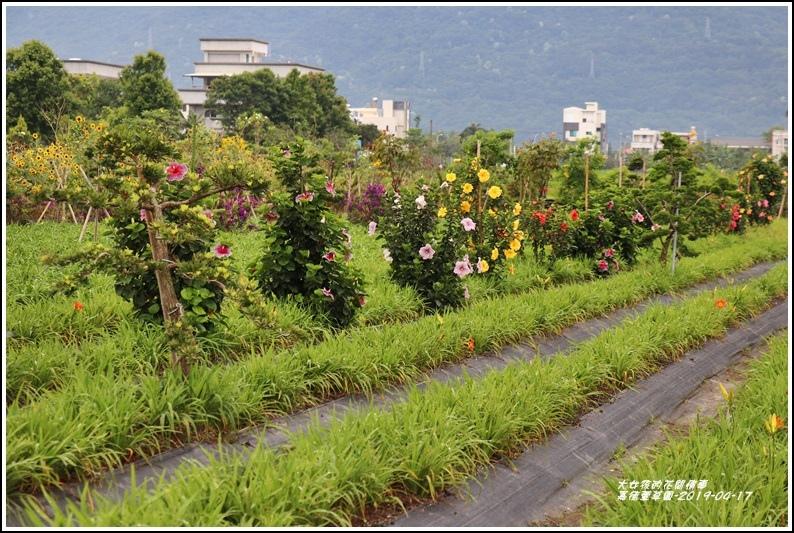嘉德萱草園-2019-04-77.jpg