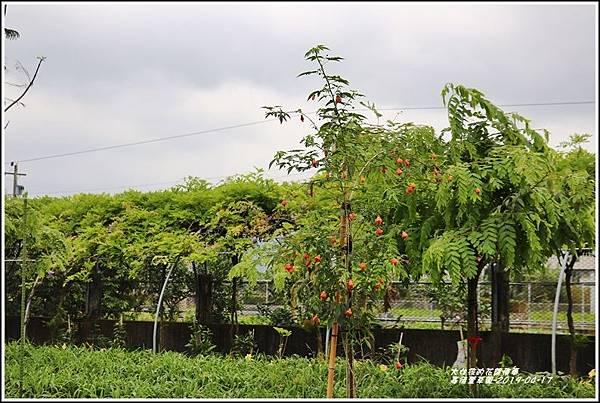 嘉德萱草園-2019-04-83.jpg