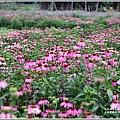 吉安紫錐花-2019-04-17.jpg