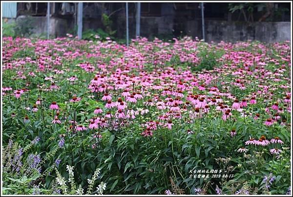 吉安紫錐花-2019-04-21.jpg