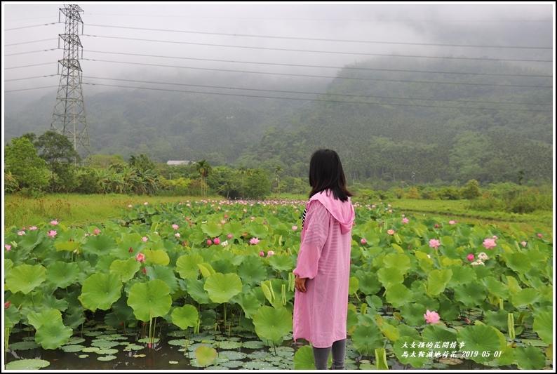 馬太鞍濕地荷花-2019-05-03.jpg
