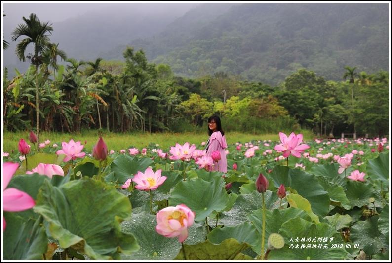 馬太鞍濕地荷花-2019-05-11.jpg