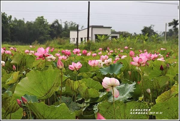 馬太鞍濕地荷花-2019-05-13.jpg