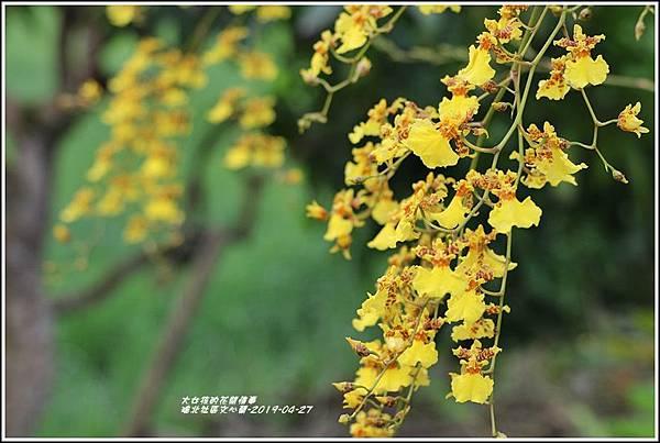 瑞北社區文心蘭-2019-04-04.jpg