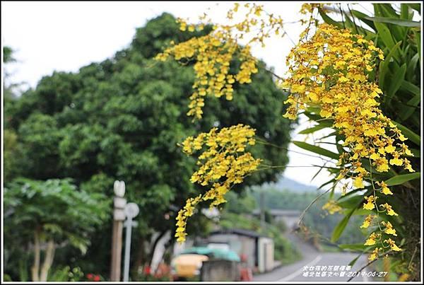 瑞北社區文心蘭-2019-04-05.jpg