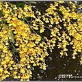 瑞北社區文心蘭-2019-04-13.jpg