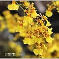 瑞北社區文心蘭-2019-04-15.jpg