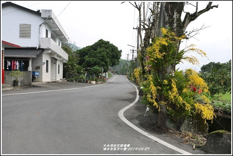 瑞北社區文心蘭-2019-04-18.jpg