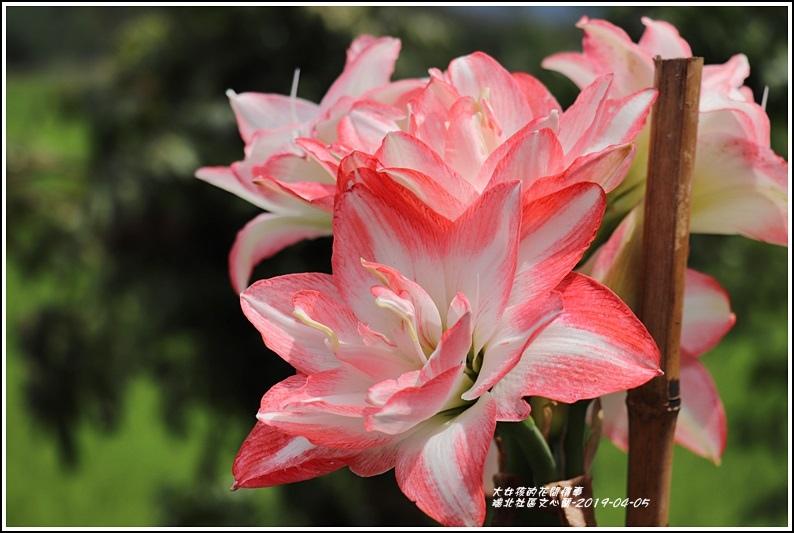瑞北社區文心蘭-2019-04-43.jpg