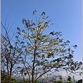 溫泉路上不知名的樹花-2019-04-07.jpg