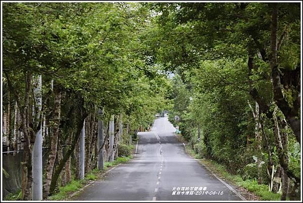 鳳林水源路-2019-04-05.jpg