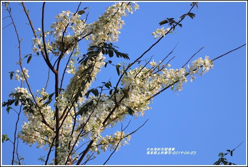 溫泉路上不知名的樹花-2019-04-03.jpg