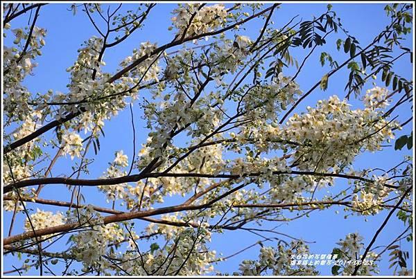 溫泉路上不知名的樹花-2019-04-02.jpg