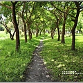 大坡池環湖步道-2019-05-17.jpg