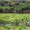 大坡池環湖步道-2019-05-19.jpg