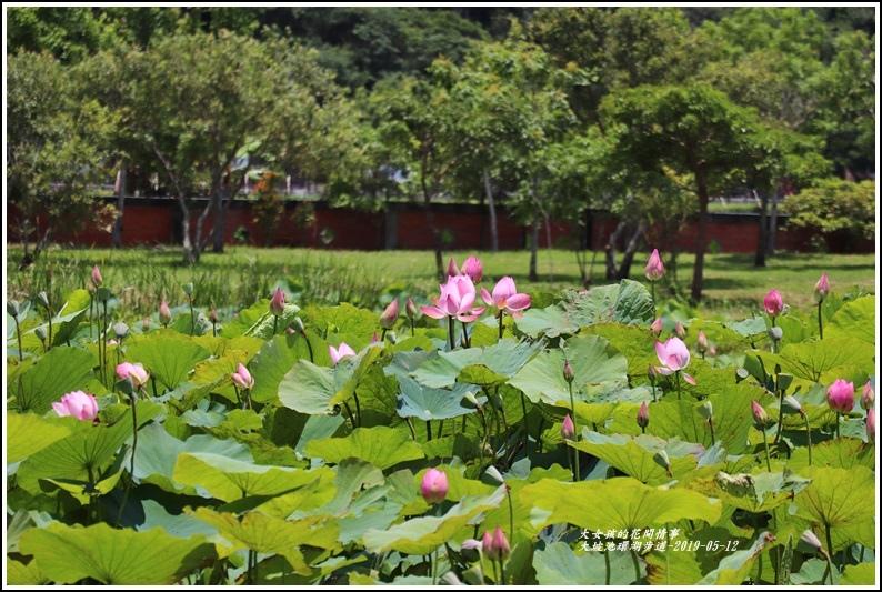 大坡池環湖步道-2019-05-20.jpg