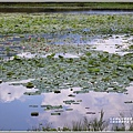 大坡池環湖步道-2019-05-36.jpg