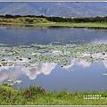 大坡池環湖步道-2019-05-41.jpg