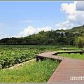 大坡池環湖步道-2019-05-46.jpg