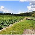 大坡池環湖步道-2019-05-47.jpg