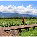 大坡池環湖步道-2019-05-50.jpg
