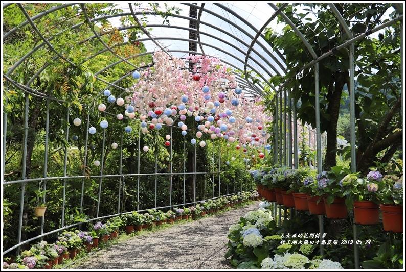 大梯田花卉生態農場-2019-05-1.jpg