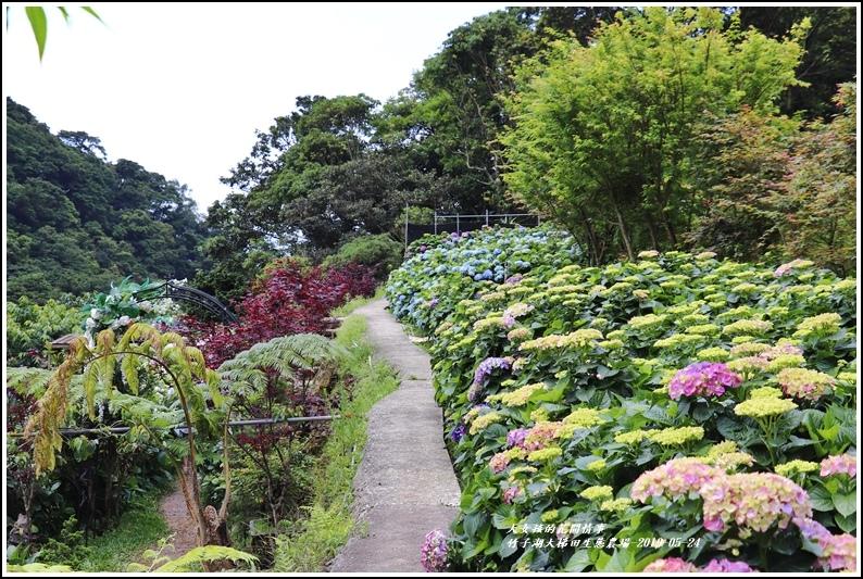 大梯田花卉生態農場-2019-05-2.jpg