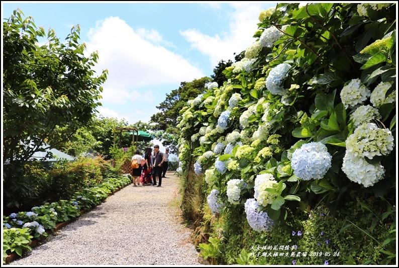 大梯田花卉生態農場-2019-05-6.jpg