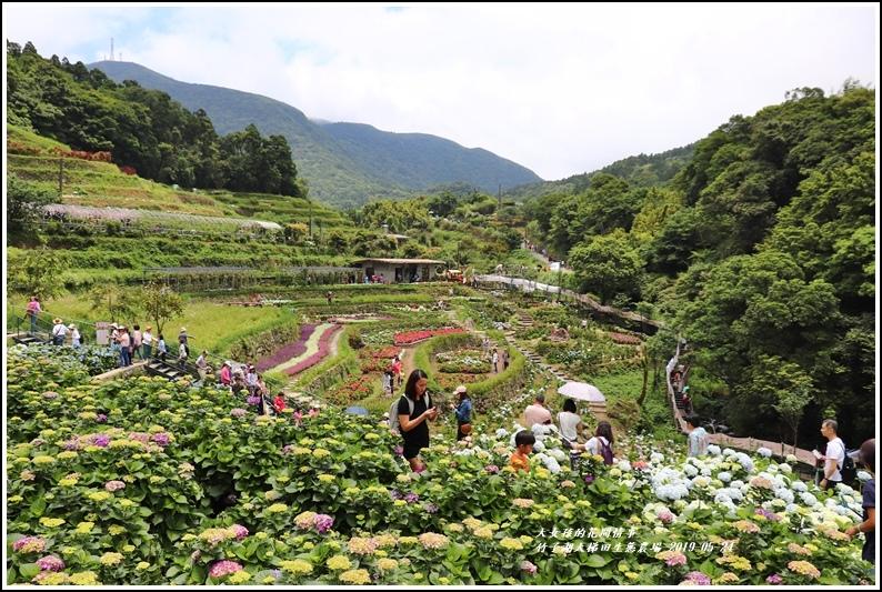 大梯田花卉生態農場-2019-05-8.jpg