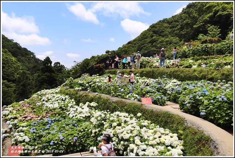大梯田花卉生態農場-2019-05-9.jpg