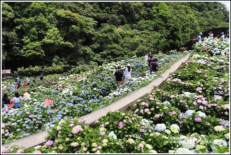 大梯田花卉生態農場-2019-05-10.jpg