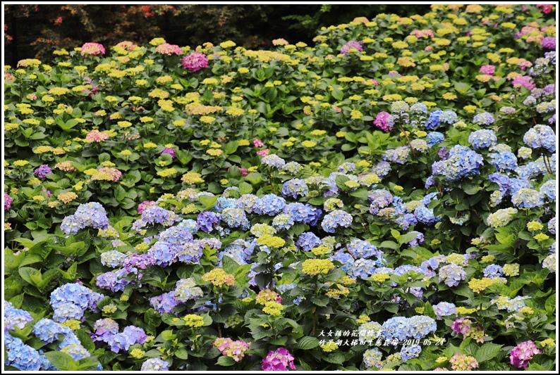 大梯田花卉生態農場-2019-05-12.jpg