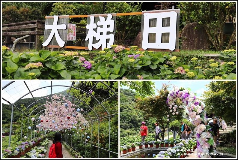 大梯田花卉生態農場-2019-05-13.jpg