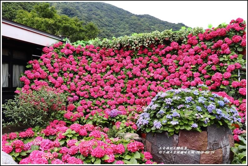 大賞園繡球花園-2019-05-1.jpg