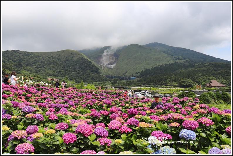 大賞園繡球花園-2019-05-2.jpg