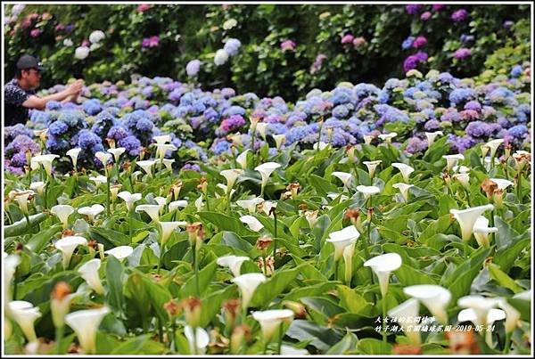 大賞園繡球花園-2019-05-4.jpg