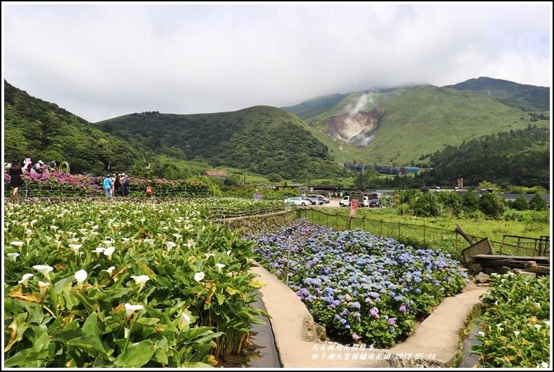 大賞園繡球花園-2019-05-7.jpg