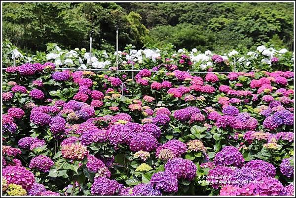 大賞園繡球花園-2019-05-8.jpg