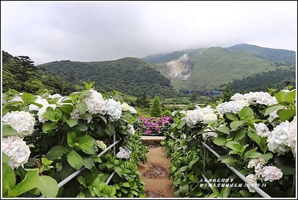 大賞園繡球花園-2019-05-11.jpg
