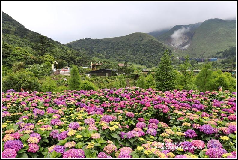 大賞園繡球花園-2019-05-12.jpg