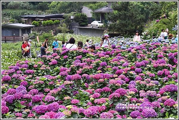 大賞園繡球花園-2019-05-13.jpg