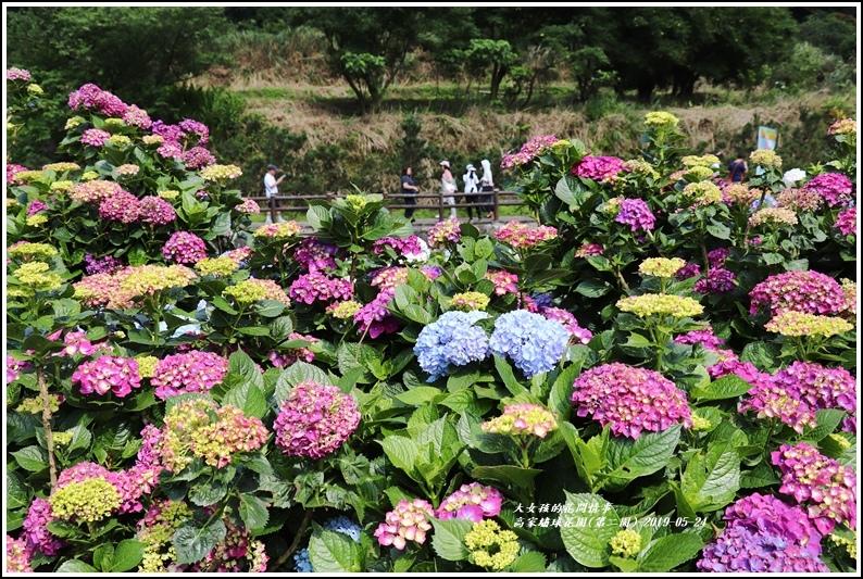 高家繡球花園(第二園)-2019-05-4.jpg