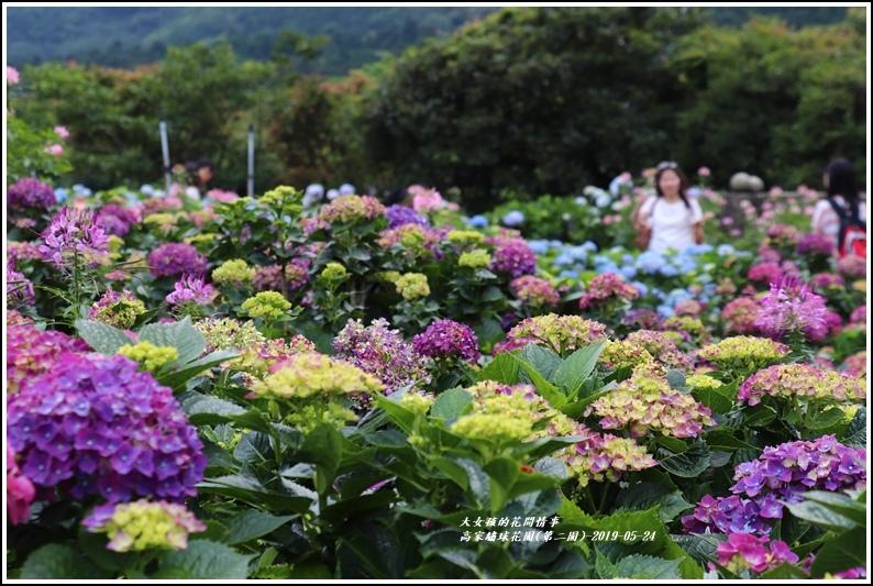 高家繡球花園(第二園)-2019-05-9.jpg