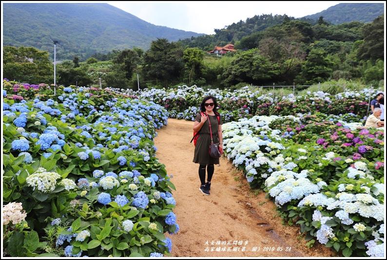 高家繡球花園(第二園)-2019-05-11.jpg